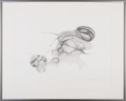 Schnirkelschnecken